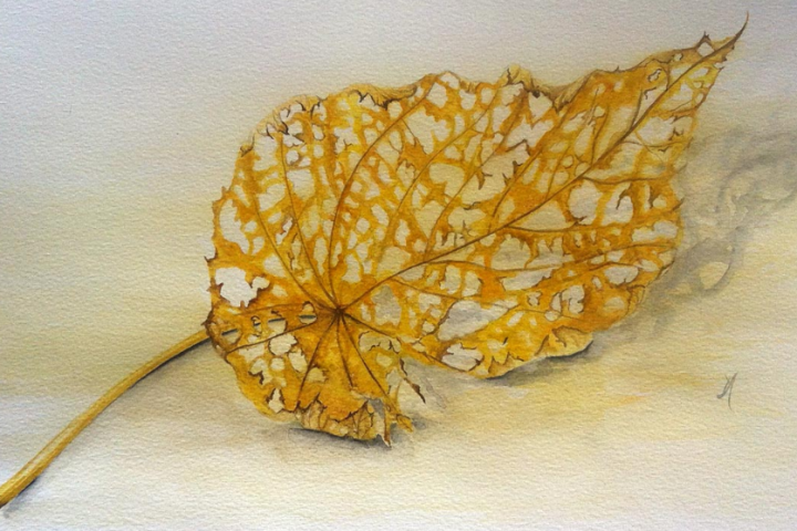 fragile leaf